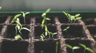 Logran controlar estomas de las plantas para hacerlas más resistentes