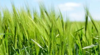 Arrancan proyecto europeo para fortalecer la agricultura
