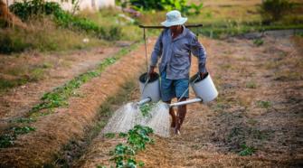Bayer orienta sus inversiones a semillas mejoradas