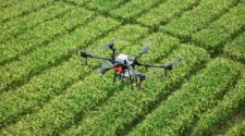 Drones e IA para un mejor rendimiento en la agricultura