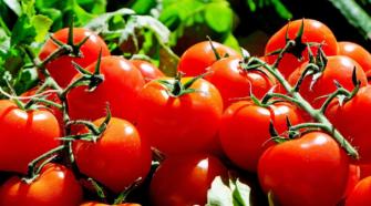 Fortalecen acciones para exportación de tomate a EE.UU.