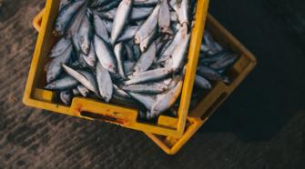 Retienen más de 107 mil kg de productos pesqueros y acuícolas