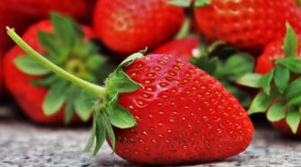 Hojas de fresa pueden combatir bacterias y hongos