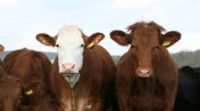 México establecerá con Guatemala acuerdo para evitar trasiego de ganado