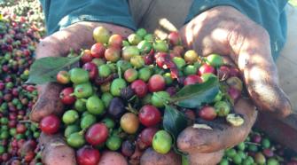 Programa entrega equipos para mejorar el manejo de café