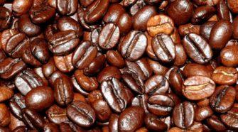 Investigadores integran nueva colección de cafés híbridos